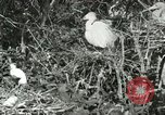 Image of wild birds United States USA, 1921, second 58 stock footage video 65675021529