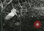 Image of wild birds United States USA, 1921, second 61 stock footage video 65675021529