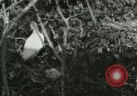 Image of wild birds United States USA, 1921, second 62 stock footage video 65675021529