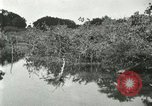 Image of wild birds United States USA, 1921, second 46 stock footage video 65675021530