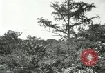 Image of wild birds United States USA, 1921, second 53 stock footage video 65675021530
