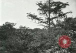 Image of wild birds United States USA, 1921, second 55 stock footage video 65675021530