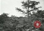 Image of wild birds United States USA, 1921, second 57 stock footage video 65675021530