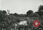 Image of wild birds United States USA, 1921, second 61 stock footage video 65675021530