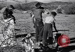 Image of American agriculture United States USA, 1939, second 20 stock footage video 65675021573