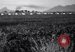 Image of cotton picking United States USA, 1939, second 7 stock footage video 65675021576