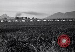 Image of cotton picking United States USA, 1939, second 8 stock footage video 65675021576