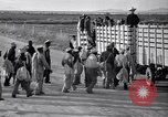 Image of cotton picking United States USA, 1939, second 37 stock footage video 65675021576
