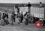 Image of cotton picking United States USA, 1939, second 38 stock footage video 65675021576