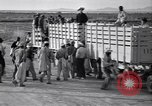 Image of cotton picking United States USA, 1939, second 39 stock footage video 65675021576