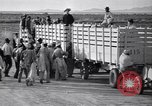 Image of cotton picking United States USA, 1939, second 40 stock footage video 65675021576
