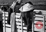 Image of cotton picking United States USA, 1939, second 41 stock footage video 65675021576