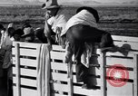 Image of cotton picking United States USA, 1939, second 42 stock footage video 65675021576