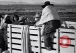 Image of cotton picking United States USA, 1939, second 43 stock footage video 65675021576