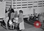 Image of cotton picking United States USA, 1939, second 46 stock footage video 65675021576