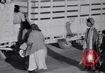 Image of cotton picking United States USA, 1939, second 47 stock footage video 65675021576