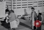 Image of cotton picking United States USA, 1939, second 49 stock footage video 65675021576