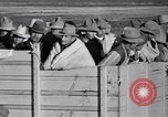 Image of cotton picking United States USA, 1939, second 50 stock footage video 65675021576