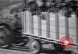 Image of cotton picking United States USA, 1939, second 60 stock footage video 65675021576