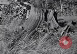 Image of Clearing trees for more farm land United States USA, 1939, second 2 stock footage video 65675021577