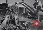 Image of Clearing trees for more farm land United States USA, 1939, second 13 stock footage video 65675021577