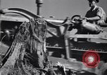 Image of Clearing trees for more farm land United States USA, 1939, second 14 stock footage video 65675021577