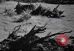 Image of Clearing trees for more farm land United States USA, 1939, second 42 stock footage video 65675021577