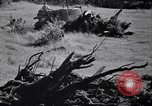 Image of Clearing trees for more farm land United States USA, 1939, second 43 stock footage video 65675021577