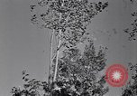 Image of Clearing trees for more farm land United States USA, 1939, second 59 stock footage video 65675021577
