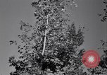 Image of Clearing trees for more farm land United States USA, 1939, second 60 stock footage video 65675021577