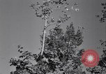 Image of Clearing trees for more farm land United States USA, 1939, second 61 stock footage video 65675021577