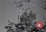 Image of Clearing trees for more farm land United States USA, 1939, second 62 stock footage video 65675021577