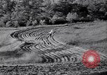 Image of American farm agriculture in 1930s United States USA, 1939, second 53 stock footage video 65675021581