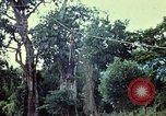 Image of military training Vietnam, 1971, second 12 stock footage video 65675021698