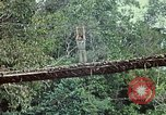 Image of military training Vietnam, 1971, second 32 stock footage video 65675021698