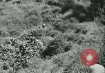 Image of Signal Corps United States USA, 1943, second 45 stock footage video 65675021720