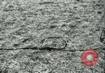 Image of Signal Corps United States USA, 1943, second 48 stock footage video 65675021720