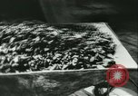 Image of World War II Germany, 1940, second 27 stock footage video 65675021735