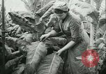 Image of Farming tobacco and fur in Denmark Denmark, 1942, second 7 stock footage video 65675021778