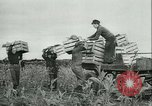 Image of Farming tobacco and fur in Denmark Denmark, 1942, second 8 stock footage video 65675021778