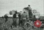 Image of Farming tobacco and fur in Denmark Denmark, 1942, second 10 stock footage video 65675021778
