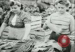 Image of Farming tobacco and fur in Denmark Denmark, 1942, second 14 stock footage video 65675021778