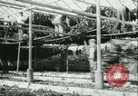 Image of Farming tobacco and fur in Denmark Denmark, 1942, second 15 stock footage video 65675021778