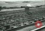 Image of Farming tobacco and fur in Denmark Denmark, 1942, second 31 stock footage video 65675021778