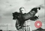 Image of Farming tobacco and fur in Denmark Denmark, 1942, second 38 stock footage video 65675021778