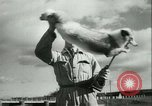 Image of Farming tobacco and fur in Denmark Denmark, 1942, second 47 stock footage video 65675021778