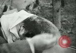 Image of Farming tobacco and fur in Denmark Denmark, 1942, second 55 stock footage video 65675021778