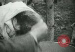 Image of Farming tobacco and fur in Denmark Denmark, 1942, second 56 stock footage video 65675021778