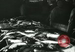 Image of Fish skin plant in Germany Germany, 1942, second 3 stock footage video 65675021789