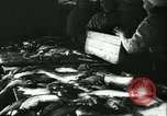 Image of Fish skin plant in Germany Germany, 1942, second 4 stock footage video 65675021789